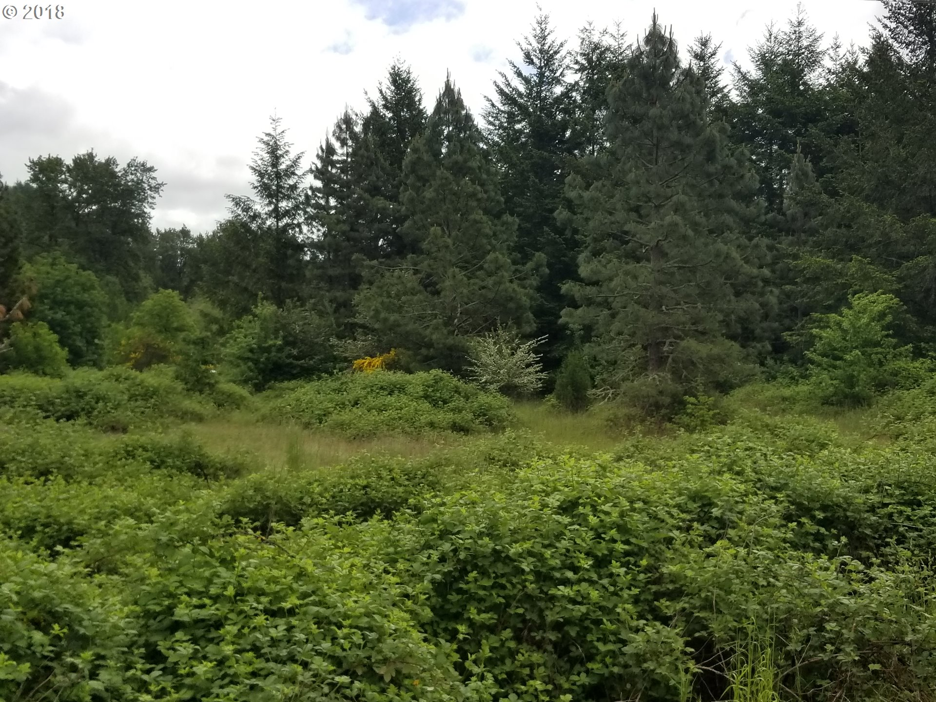 34870 SPILLWAY lot1 RD Cottage Grove, OR 97424 18673930